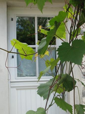 facade-vigne
